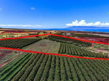 100 Aina Mahiai St #Lot 51, Kaanapali Coffee Farms, HI