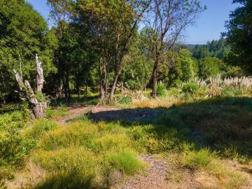 Lupine  Valley Rd Aptos CA. Photo 2 of 19